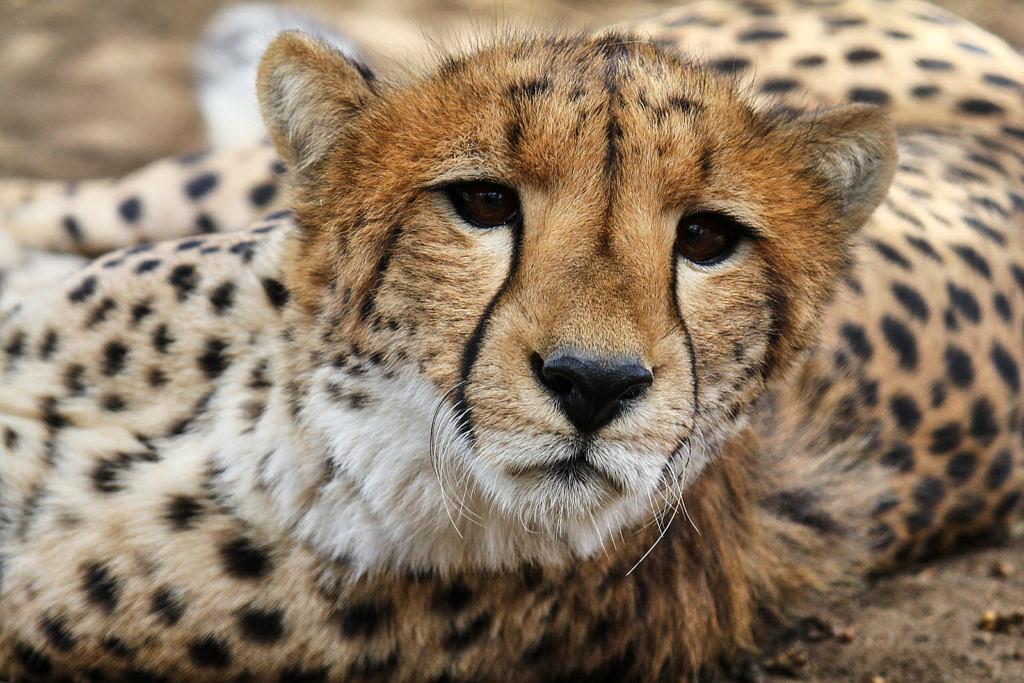 Moholoholo: Wildlife Rehabilitation Centre